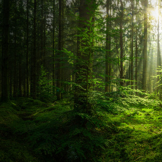 Folk Forest - Indie Folk on The Village